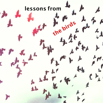 lessons from the birds